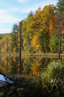 Mme Sherie's beaver pond in Autumn by mirengraphics