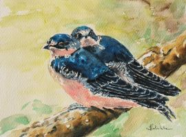 Young swallows by danuta50