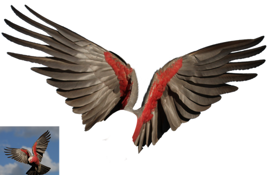 wings png by 35-Elissandro