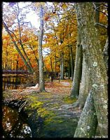 Autumn Trees by JDM4CHRIST
