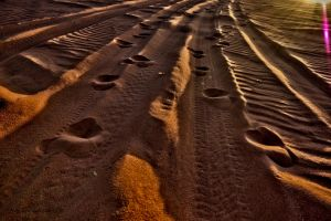 Motorized camel tracks by forgottenson1