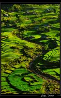 Rice fields in Sapa, Vietnam by catalindragosh