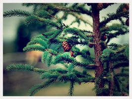 Covered with Pinecones by Lydia-distracted