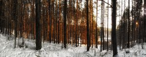 Winter forest 2 by MrFotkerman