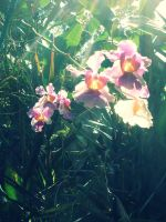 orchid in our garden by lorain05