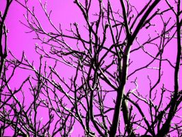 Pink in the Trees by XxFreakOfNaturexX