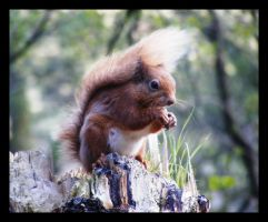 Squirrelly Times II by loopylass14uk