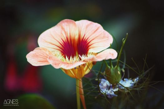 Flower 1 by AgnesBPhoto