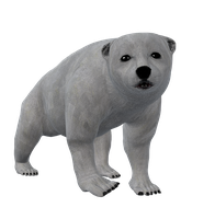 Polar Bear Cub Png Stock by Direwrath