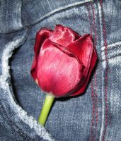 Tulip-RedandDenim by SnapshotsAtMidnight