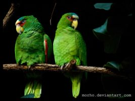 green by morho