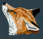 Foxity fox fox by Parasols