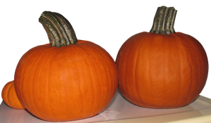 Pumpkins on a Table PNG by WDWParksGal-Stock