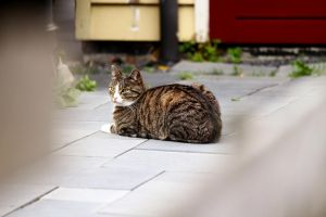 Neighbours cat by Leitz APO Telyt lens by pagan-live-style