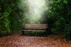 The bench by Jeni-Sue
