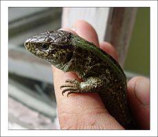 -reptile stock- by Anotheroutsider
