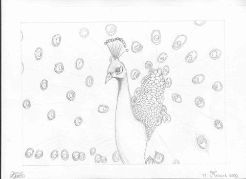 'Peacock Fever' Sketch I by Cosquilleos