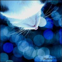 Cat in blue .. by DiamondRWolf