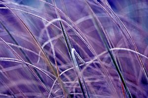 icegrass by augenweide