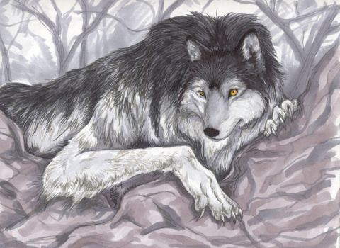 Werewolf finished by aichan25
