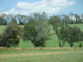 Two Rows of Trees and a Hill by AnnamaeTezuka