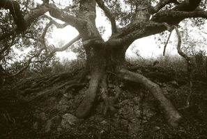 Great Tree by Pickles4LES