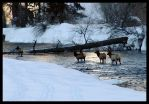 Elk River by zasu