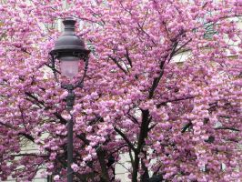 Blossoms and Streetlamp by sushi-robots