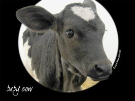 Baby cow by attack-kitten