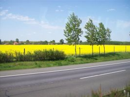 Yellow Fields in Hungary by Arya-DragonQueen