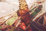 Butterfly 2 by 0fiore0