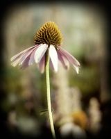 Lone Cone Flower by Audiocracy1976