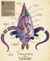 Kraken Anatomy- Natural History of the Fantastic by Christopher-Stoll