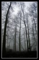 Dark Woods by Ballisticvole