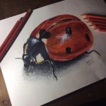 Ladybird Drawing by LucyCrt