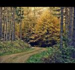 Walk in the Forest by sternenfern