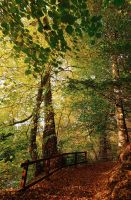 Belvoir Forest Path, Autumn 09 by Gerard1972