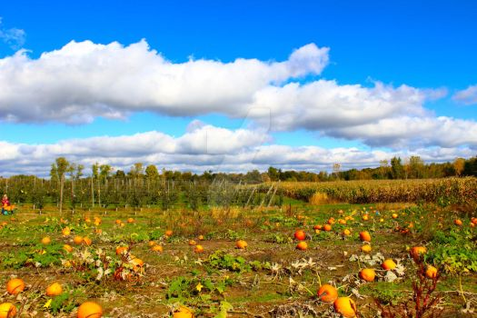Pumpkin Patch by xd0rkvict0rx