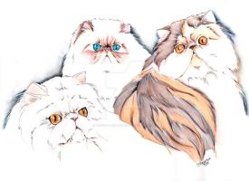Purr-fect Persian by concettasdesigns