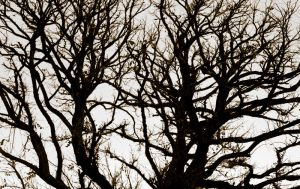 Branches by RonderfulRonnie