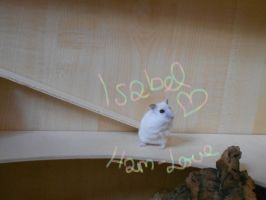 For my lovely hamster by Nayirah
