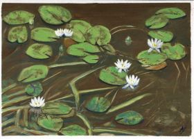 Far-Eastern Water Lilies by h-i-l-e-x