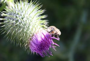 picking apart Thistle by KarmicCircle