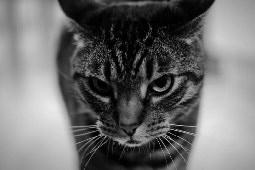 You talking to me? by Sjodin
