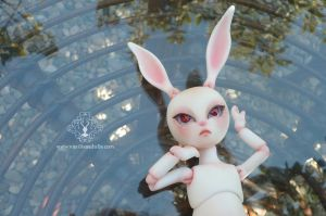 Pom Pom white rabbit by Leablackvelvet