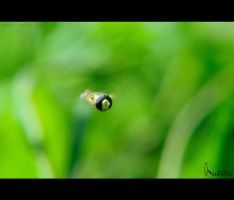 Catch Me If You Can.... by nimitnigam