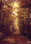 autumn forest by cloe-patra