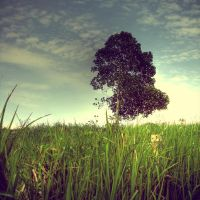 One Tree on a Hill by jamlamin