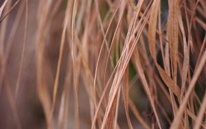 Winter Grass 2 by snipes2