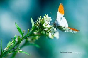 Orange tip by Michelle-Fennel
